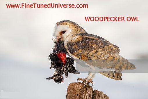 Woodpecker OWL?